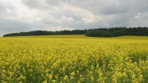 Práce v zemědělství středočeský kraj